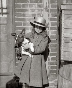 Young lady holding a pit bull in Washington DC - 1915